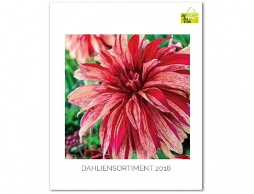 Dahliensortiment 2018